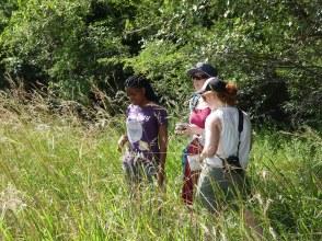 Exploring a small wetland